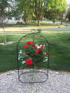Geraniums and Petunias on wrought iron plant hanger