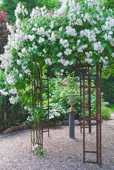 Garden | Sonja Bannick Pictures  love the trellis with focal point