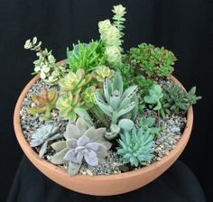 Succulent Bowl; http://www.lowes.com/creative-ideas/gardening-and-outdoor/plant-a-succulent-bowl/article