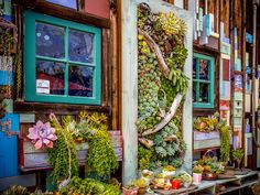 A café in Oceanside, Calif. with an amazing collection of artfully displayed succulents.