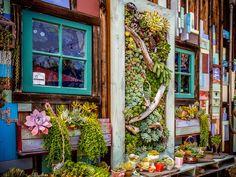 多肉植物とサボテンの写真多肉植物カフェ(ピーター・ロヨラ)オーシャンサイド、カリフォルニア州