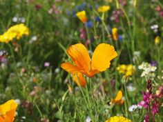 How to sow a wild flower meadow in your garden