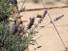 bumbling around with the bumble bees. Bumble Bees, Finding Joy, Plants, Plant, Planets