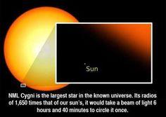 La estrella llamada NML Cygni es la más grande del universo conocido. Su radio es 1,650 veces mayor que el de nuestro Sol. Un haz de luz tardaría 6 horas y 40 minutos en darle una vuelta entera a este gigante: