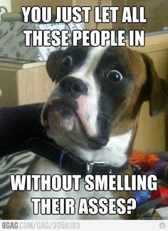 Surprise Dog