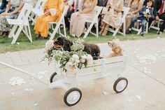 DIY All White Wagon in 5 Easy Steps   Just A Tina Bit Wagon For Wedding, Dog Wedding, Our Wedding Day, Wedding Ideas, Flower Girl Wagon, Radio Flyer Wagons, Mother Son Dance, Paint Drop, Wedding Playlist