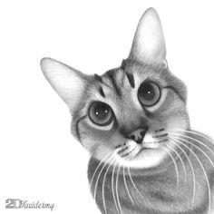 A portrait of Peanut :: Hand drawn with graphite pencils