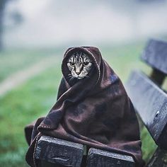 Reposting @extreemnatureoriginal: New Star Wars Character?  #nature #cat #cats  #travel #travelling #world #earth #backpacking #surf #animals #nature #wildlife #wild #trip #explore #daily #video #saturday#friend #instagood #insta #instagram #sights #dream #paradise #beautiful #heaven #starwars