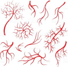 Human eye veins or vessel, red capillaries, blood arteries isolated set royalty-free stock vector art
