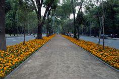 Avenida Reforma en Ciudad de México, una de las más recorridas, una de las más tradicionales, una de las más bellas. ¡Imperdibles! http://www.bestday.com.mx/Mexico/