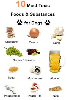 dog friendly over the counter dog medication - Google Search