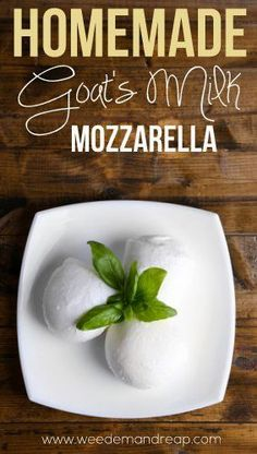 Homemade Mozzarella made from FRESH Goat's milk! Hopefully getting our goats soon. The chicken tractor is first, since we have meat chickens waiting Goat Milk Recipes, Goat Cheese Recipes, Real Food Recipes, Cooking Recipes, Homemade Cheese, Mozzarella Homemade, Goat Milk Mozzarella Recipe, Milk And Cheese, Blue Cheese