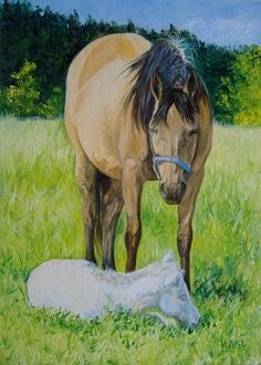 Buckskin Mare With Her Newborn Foal.