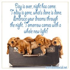 21 Best Good Night Quotes Images Good Night Quotes Timeline