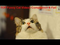 Funny Cat Videos Compilation and Fail 2016-2017 (HD)-New, Best and Funniest videos