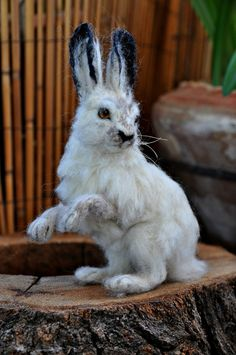 Needle felted animal. White tailed Jackrabbit by darialvovsky