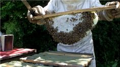 McCartney Taylor has some of the best YouTube Videos about bee keeping out there. His website is also very informative.