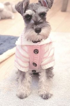 Adorable Puppies, Cute Dogs And Puppies, Baby Dogs, Adorable Animals, Doggies, Mini Schnauzer Puppies, Standard Schnauzer, Miniature Schnauzer, Dog Love