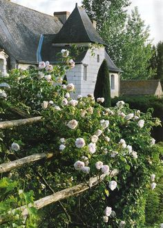I LOVE roses cascading over a fence . . . . would like to hook that up at my own house.