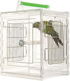 Go Bird Friendly? 10 Tips for Traveling with Pet Birds Parrot Pet, Parrot Toys, Small Birds, Pet Birds, Budgies, Parrots, Crazy Bird, Conure, Pet Travel