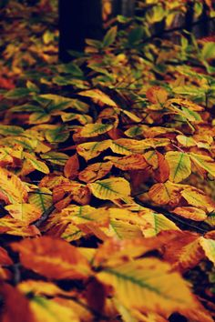 Leaves changing colors.