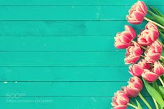 Pink peony tulips background by Arx0nt