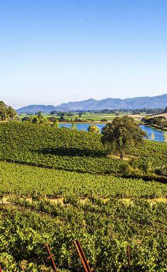 California Itinerary and Travel Guide: Lush Napa Valley vineyards.