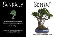 Un très beau sujet de Bonsaï Ficus Retusa de 45 cm. Ideal pour débuter, beaucoup de charme, nombreuses racines aériennes. Bonsai disponible à la vente chez www.sankaly-bonsai.com  http://www.sankaly-bonsai.com/achat-vente-acheter-bonsai-interieur-sankaly-bonsai/3144-vente-de-bonsai-ficus-retusa-45-cm-sankaly-bonsai-fr140904.html