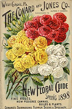 Catalog Information    Company Name:  Conard and Jones Co.    Catalog Title:  New Floral Guide (1898)  Publication Information:  West Grove, PA  United States  Category(ies) of Cover Art:  Roses