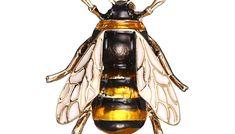 Brosa de dama cu albina