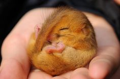 Newborn baby squirrel