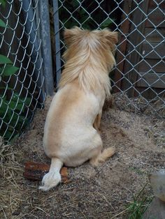Lion puppy from the back