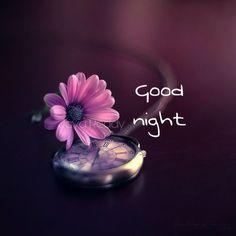 New Good Night Images, Good Morning Beautiful Pictures, Cute Good Night, Good Night Gif, Good Night Sweet Dreams, Happy Good Night, Good Night Beautiful, Good Night Hindi Quotes, Good Night Messages