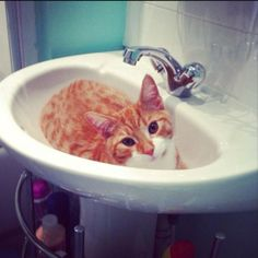 This is how I found my cat Xander one night when I woke up to use the bathroom. From Jade Crossley:
