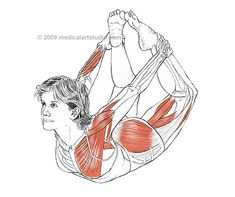 Muscular Anatomy - Bow Pose