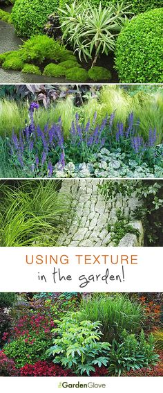 Use this lesson on garden design to learn how to add texture (and interest!) to your garden. Garden design is easy if you use simple design principles! Outdoor Plants, Garden Plants, Outdoor Gardens, Backyard Plants, Outdoor Spaces, Outdoor Living, Parcs, Plantation, Gardening Tips