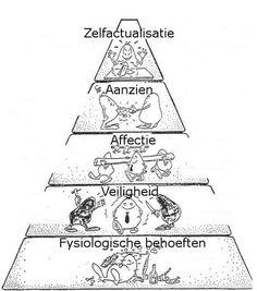 piramide van maslow; gedrag komt voort uit behoefte