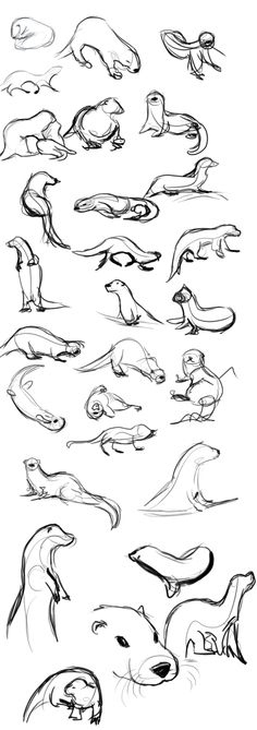 Otter Gestures by Temiree on DeviantArt