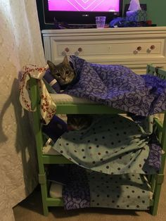 Triple decker cat bunk bed