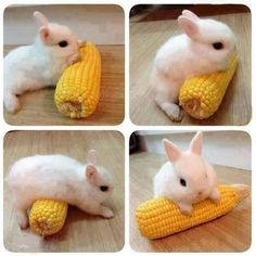 This Is My Corn