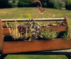 An old wooden toolbox gets a makeover with a collection of small potted plants. Drill holes in the bottom of the box to allow for drainage. And if your box isn't made of a rot-resistant wood like cedar or redwood, finish it with a coat of polyurethane. love this!!