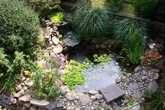 I want a pond like this in my garden. I've always loved ponds and the wildlife that comes with them