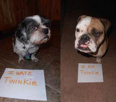 Dog Shame   I hate Twinkie. I am Twinkie.