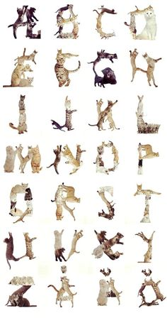 Cat Alphabets design-typography