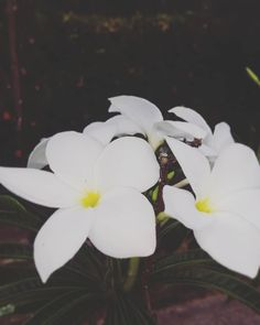 World, Nature, Flowers, Plants, Instagram, Naturaleza, Fotografia, Florals, Plant