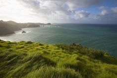 Northland is most renowned for its fabulous beaches. Here are the top nine beaches to visit north of the Bay of Islands, New Zealand. North Island New Zealand, Bay Of Islands, Bays, Beach Tops, Beaches, Heaven, Adventure, Water, Outdoor