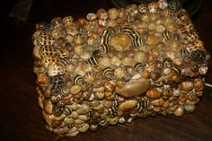 vignette design: Tuesday Inspiration: Seashells
