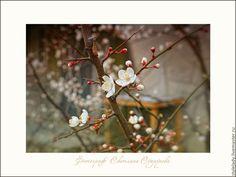 Купить ОПЯТЬ ВЕСНА НА БЕЛОМ СВЕТЕ ...( авторская фотокартина для интерьера) - весна, фотокартина