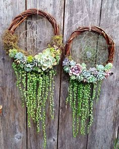 Gentle dream catchers of succulents. #succulent_wreaths #SerraGardens_succulents #String_of_pearls_succulents