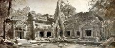 Ta Prohm - Ta Prohm d'Angkor